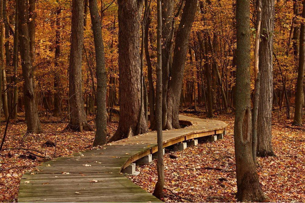 Wooden pathway through trees